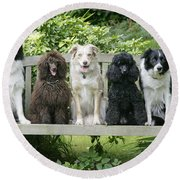 Poodles And Other Dogs On A Bench Round Beach Towel