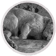 Pooped Puppy Bw Round Beach Towel by Steve Harrington