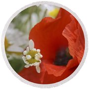 Close Up Of A Poppy With Daisies Round Beach Towel