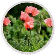 Poppies In My Garden Round Beach Towel