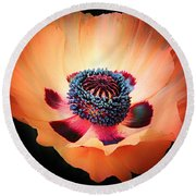 Poppy In The Darkness Round Beach Towel