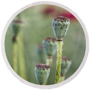 Poppy Pods Round Beach Towel