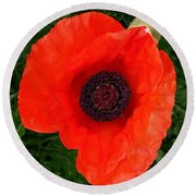 Poppy Of Remembrance  Round Beach Towel