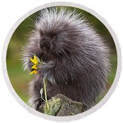 Porcupine With Arrowleaf Balsamroot Round Beach Towel
