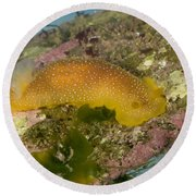 Porostome Nudibranch Round Beach Towel