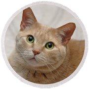 Portrait - Orange Tabby Cat Round Beach Towel