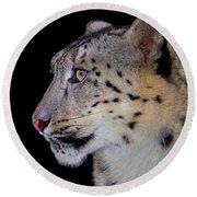 Portrait II Of A Snow Leopard Round Beach Towel