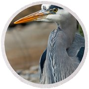 Portrait Of A Blue Heron Round Beach Towel