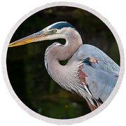 Portrait Of A Blue Heron Round Beach Towel