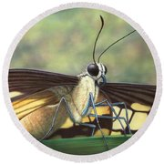 Portrait Of A Butterfly Round Beach Towel by James W Johnson