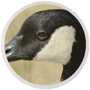 Portrait Of A Canadian Goose  Round Beach Towel