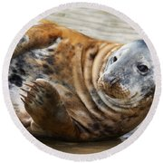 Portrait Of A Common Seal  Round Beach Towel