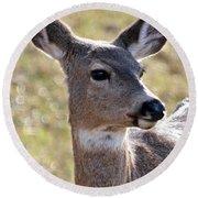 Portrait Of A Deer Round Beach Towel