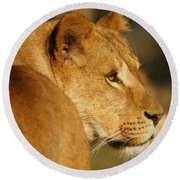 Portrait Of A Dreamy Lioness  Round Beach Towel