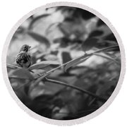 Portrait Of A Finch Round Beach Towel