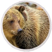 Portrait Of A Grizzly Round Beach Towel