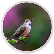 Portrait Of A Hummer 2 Round Beach Towel