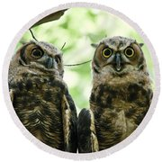 Portrait Of A Pair Of Owls Round Beach Towel