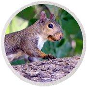 Portrait Of A Squirrel Round Beach Towel