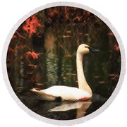Portrait Of A Swan Round Beach Towel