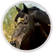Portrait Of A Thoroughbred Round Beach Towel