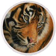 Portrait Of A Tiger Round Beach Towel by David Stribbling