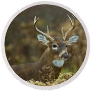 Portrait Of A White Tailed Buck Round Beach Towel