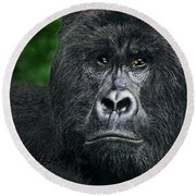 Portrait Of A Wild Mountain Gorilla Silverbackhighly Endangered Round Beach Towel