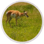 Portrait Of A Young Pronghorn Round Beach Towel