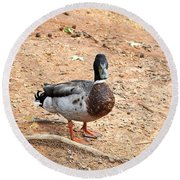 Portrait Of An Alabama Duck 2 Round Beach Towel