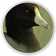Portrait Of An American Coot Round Beach Towel