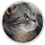 Portrait Of An Ameriican Shorthair Cat Round Beach Towel