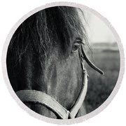 Portrait Of Horse In Black And White Round Beach Towel