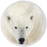 Portrait Of Polar Bear On The Shore Ice Round Beach Towel