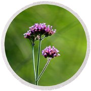 Portrait Of Purple Verbena Round Beach Towel