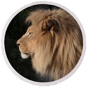 Portrait Of The King Of The Jungle  Round Beach Towel