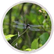 Posing Dragonfly Round Beach Towel