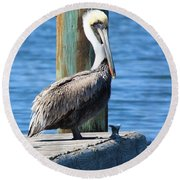 Posing Pelican Round Beach Towel