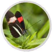 Postman Butterfly On Green Round Beach Towel