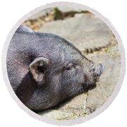 Potbelly Pig Round Beach Towel