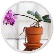 Potted Pink Orchid Round Beach Towel