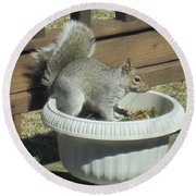 Potted Squirrel Round Beach Towel
