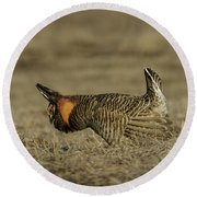 Prairie Chicken-9 Round Beach Towel by Thomas Young