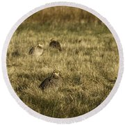 Prairie Chickens After The Boom Round Beach Towel by Thomas Young
