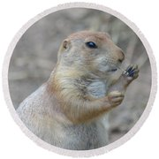 Prairie Dog Cleaning His Teeth Round Beach Towel