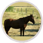 Prarie Stallion In The Shade Round Beach Towel by Barbara Griffin