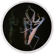 Praying Mantis 2 Round Beach Towel