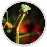 Praying Mantis Portrait Round Beach Towel