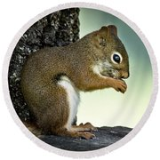 Praying Squirrel Round Beach Towel
