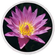 Pretty In Pink And Yellow Water Lily Round Beach Towel